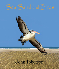 Sand Sea asd Birds Cover picture