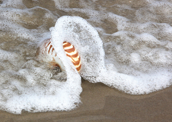 Wave Breaking over a Nautilus shell