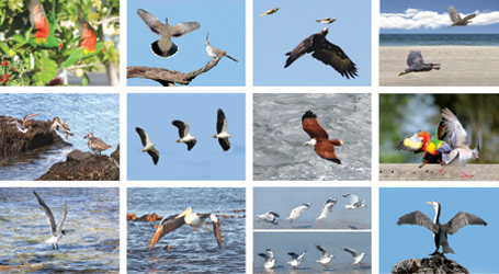Images of Birds highlighting their wings